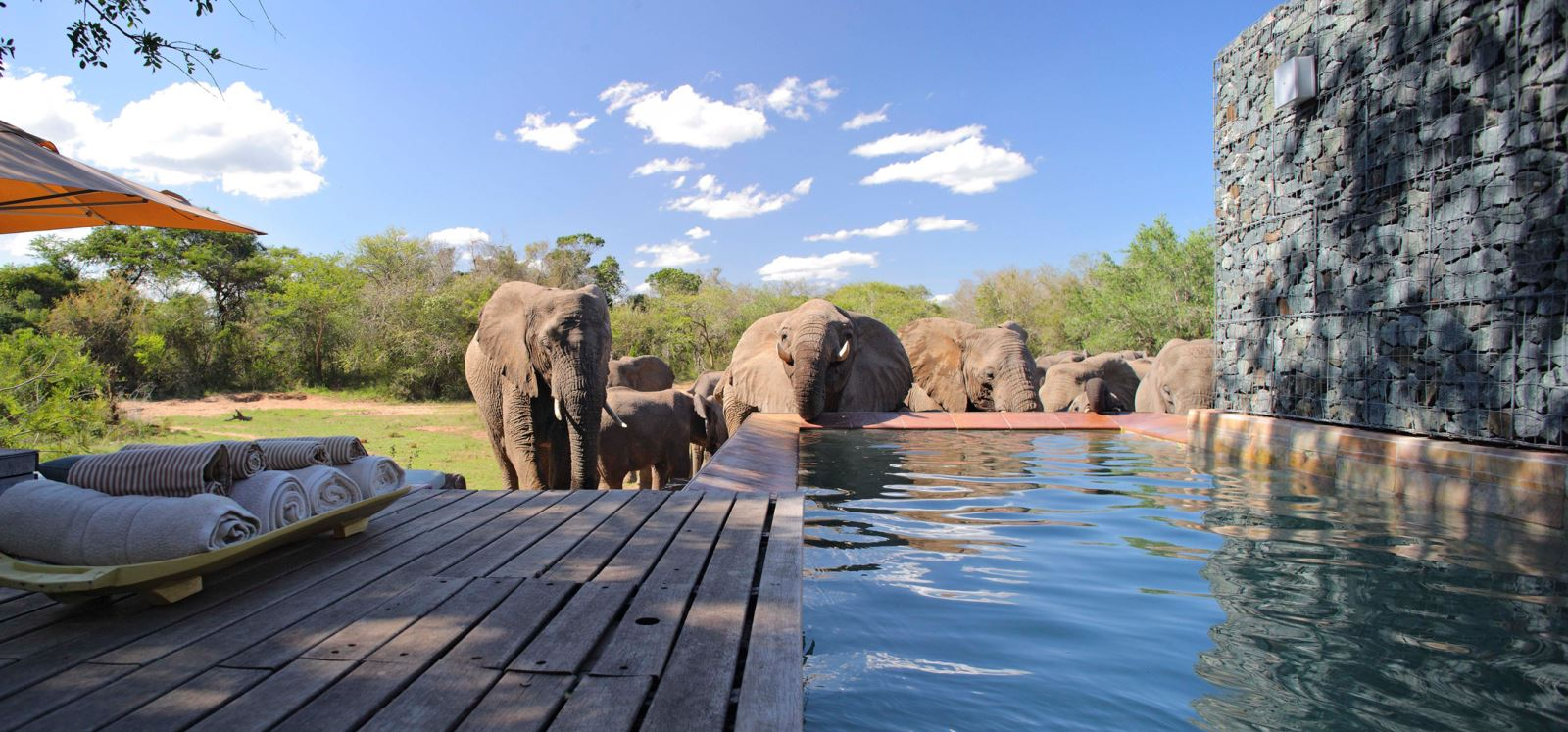 phinda homestead pool south africa